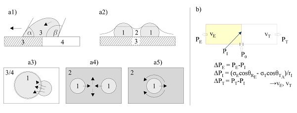 a) The separation process steps (1 = water, 2 = Toluene, 3 = hydrophilic surface, 4 = hydro-phobic surface): (a1) Laplace pressure difference induced water droplet movement to the hydrophilic surface. (a2) Water droplets coalescence due to capillary force